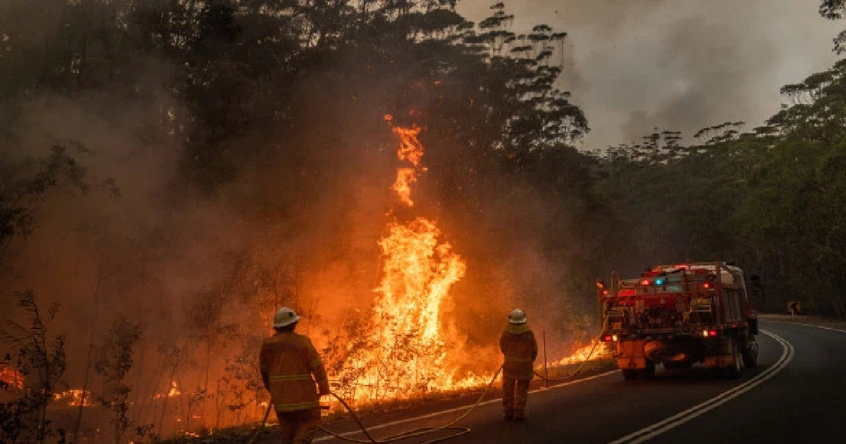 Australian Greens calls for bushfire emergency medical stockpile
