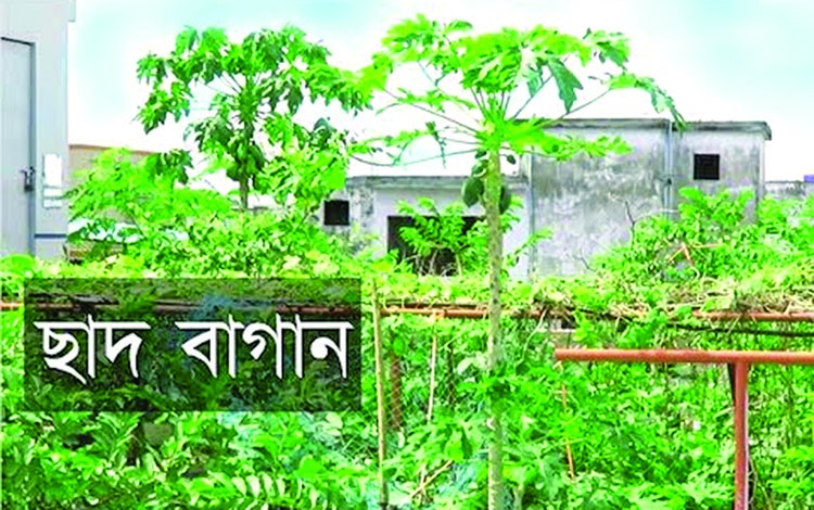 A strategy of sustainable urban agriculture