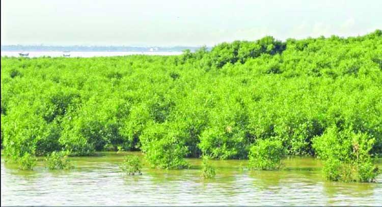A small river in Bakkhali