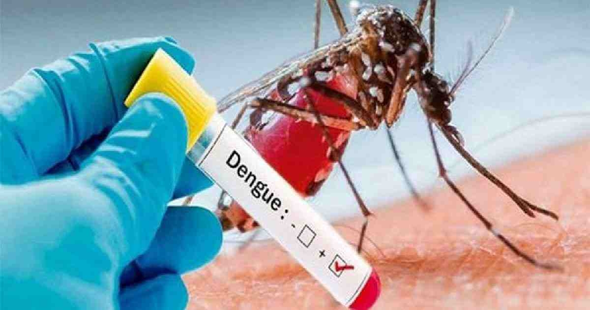 One dengue case reported in 24 hrs