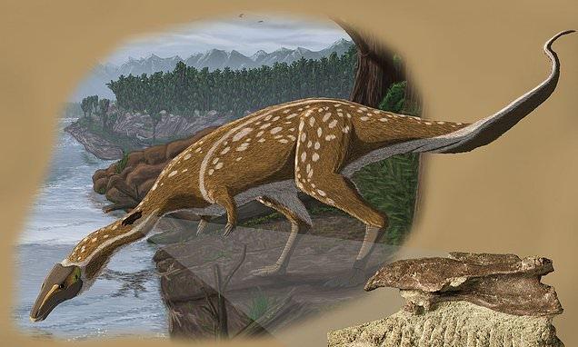 Rare 'toothless' dinosaur identified in Australia