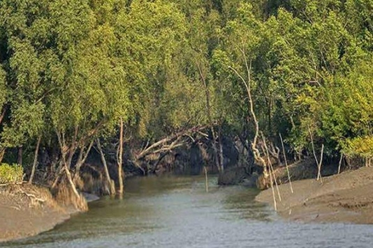 Sundarbans once again stand against cyclone as savior
