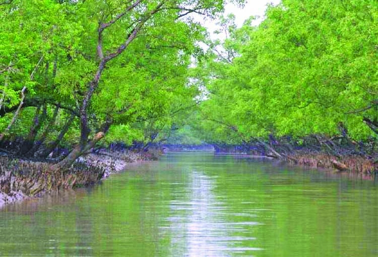 Sundarbans again appear as savior
