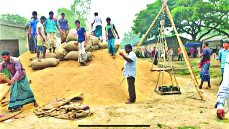 Govt to procure paddy directly from farmers
