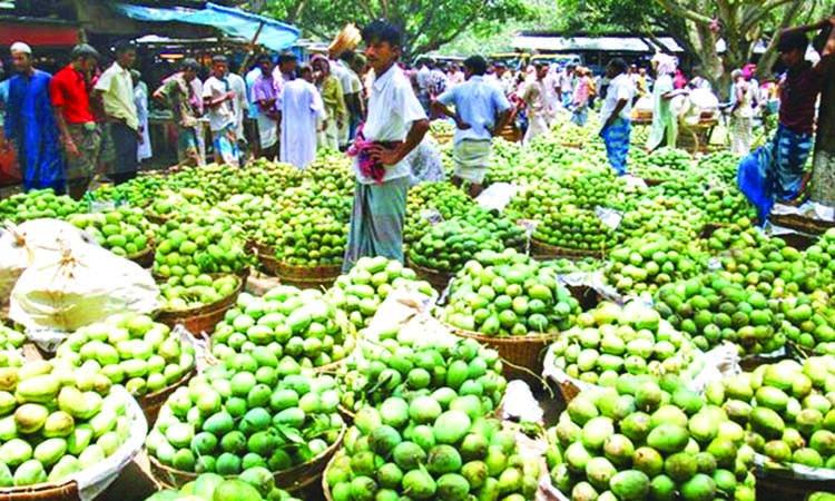 Mango business gains momentum in Rajshahi, C'nawabganj
