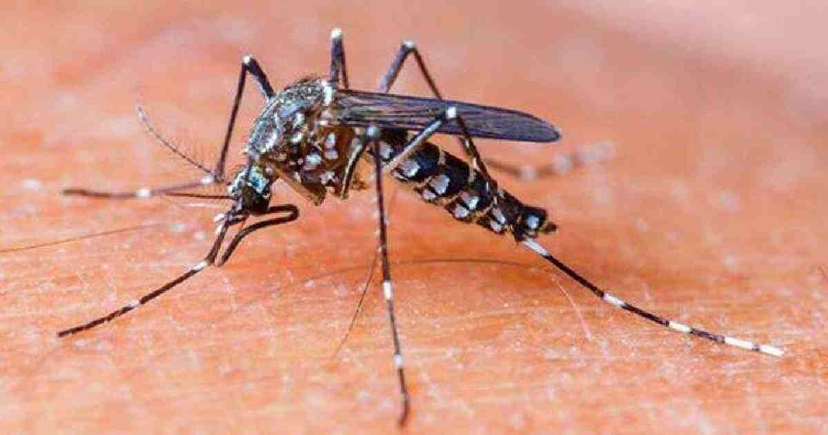 4 new dengue cases reported in 24 hrs: DGHS