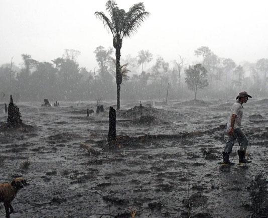 Brazil's Bolsonaro under pressure to protect Amazon
