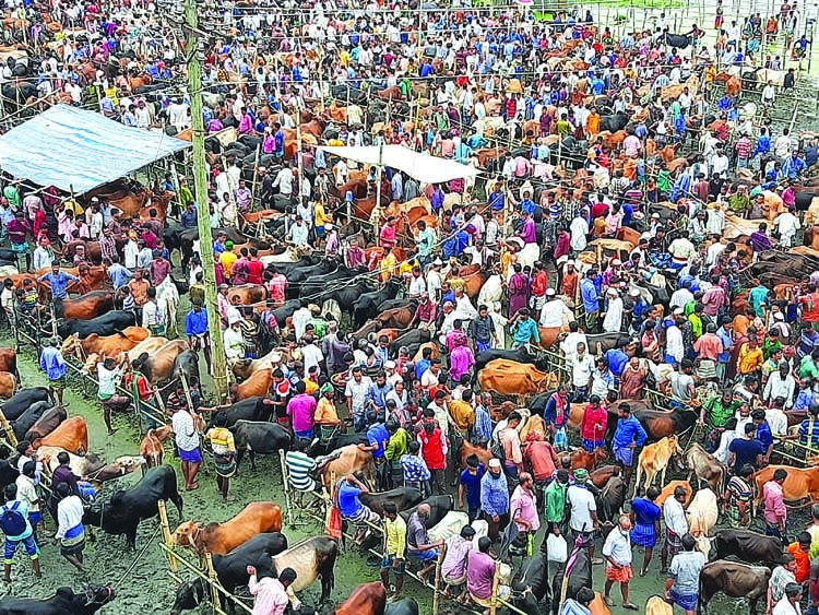 Sacrificial animal market yet to get momentum in Barishal