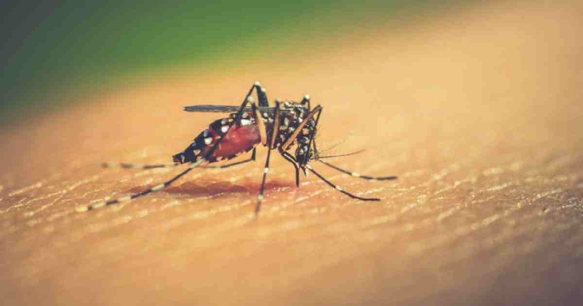 2 new dengue cases reported in 24 hrs: DGHS