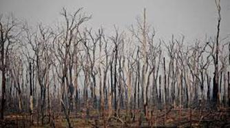 Brazilian Amazon fires surge in July