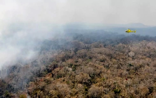 Amazon risks tipping from forest to savanna: study