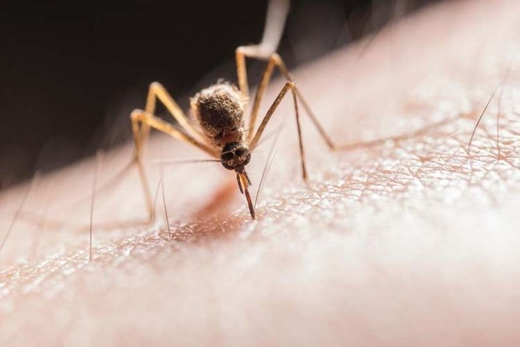 With these 10 tips you can quickly get rid of itchy mosquito bites