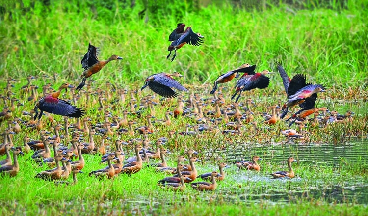 JU campus: A paradise for migratory birds
