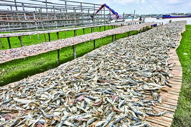 Dried fish business at stake