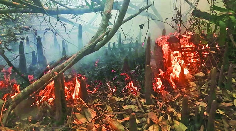 Fire breaks out at Sundarbans