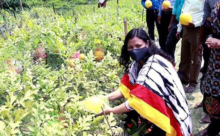 Success in Golden Crown watermelon cultivation