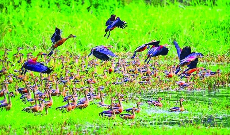 'Habitat of migratory birds must be protected'