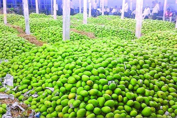Mango hits the market
