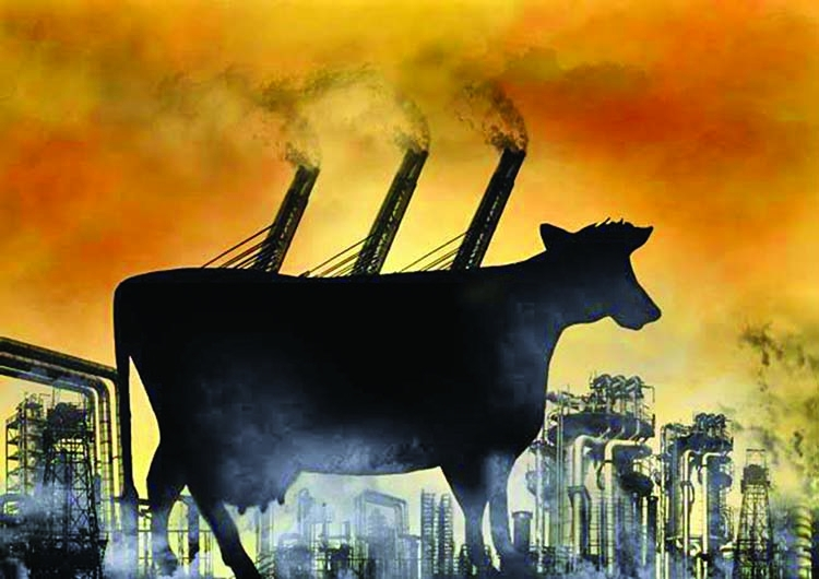 Reduce Meat Consumption, Tackle Climate Change