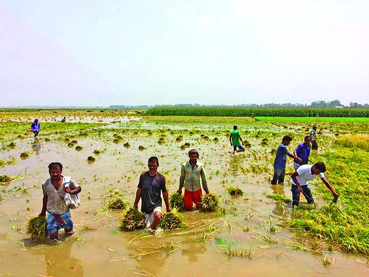 Chalan Beel: The enormous wetland in Bangladesh