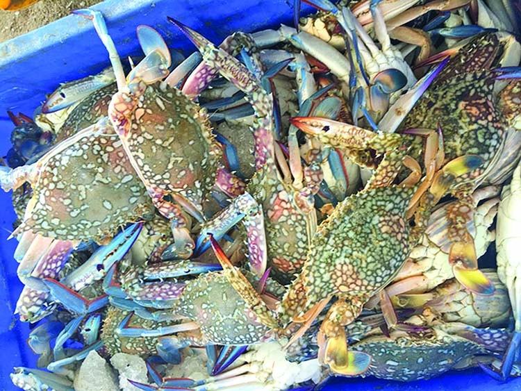 BD resumes crab exports to China