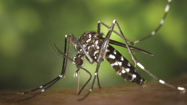 317 dengue patients admitted to hospitals in 24 hours: DGHS