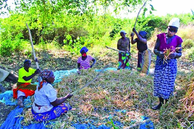 Women Farmers & World Food Status