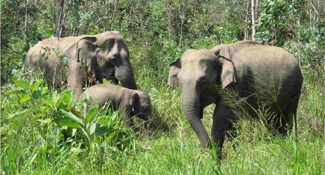The first safari park in Bangladesh
