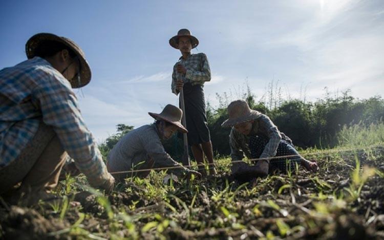 21 granted bail in Myanmar army land-grabbing case