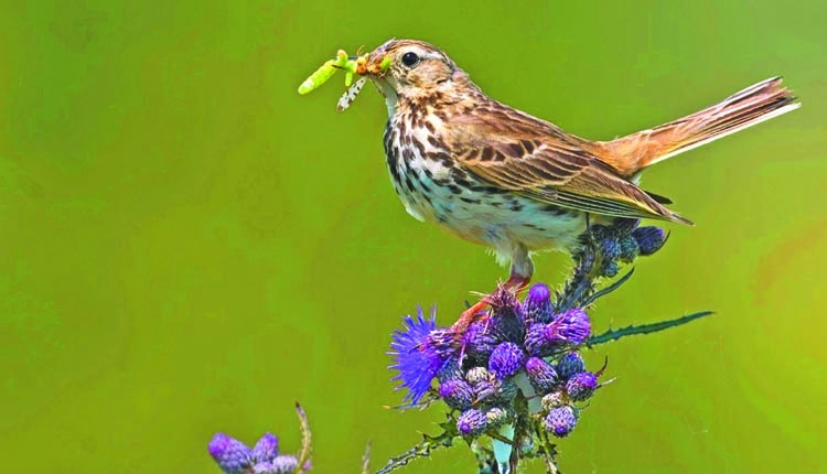 Bird species vanish from UK due to climate change