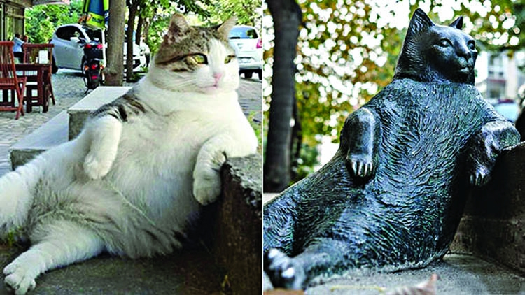 Fat cats are a  good thing