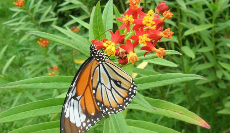 First Butterfly Park in Bangladesh