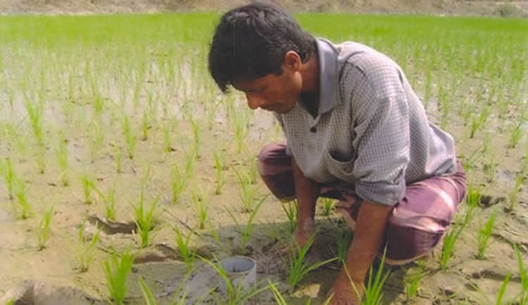 AWF irrigation gets  popular in Rangpur