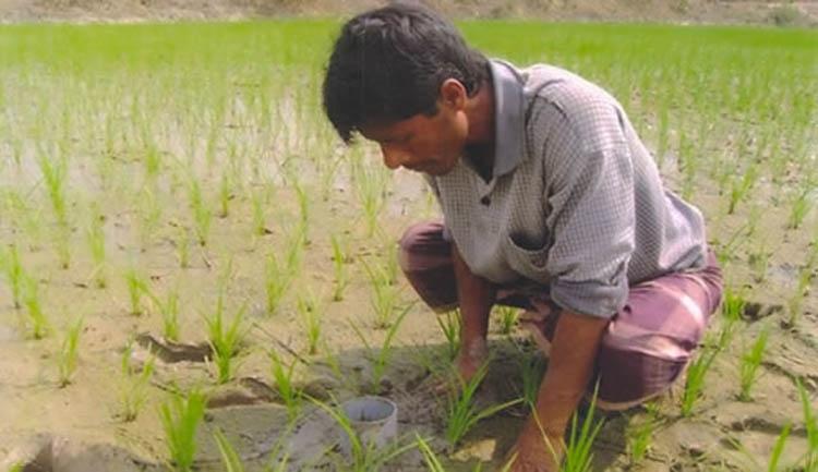 AWF irrigation gets  popular in Rangpur