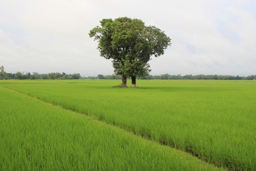 Land management draft act gets Cabinet nod
