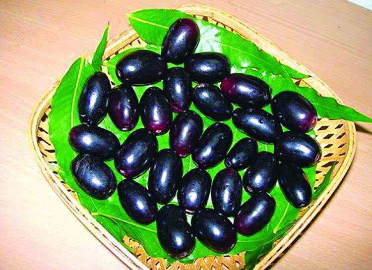 Health Benefits Of Jaam Syzygium Cumini  The Asian Age Online, Bangladesh-6557