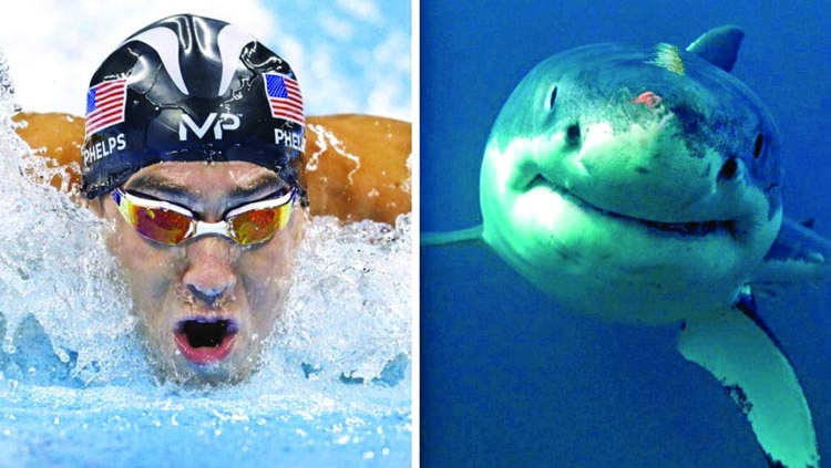 Phelps loses 'race' to shark