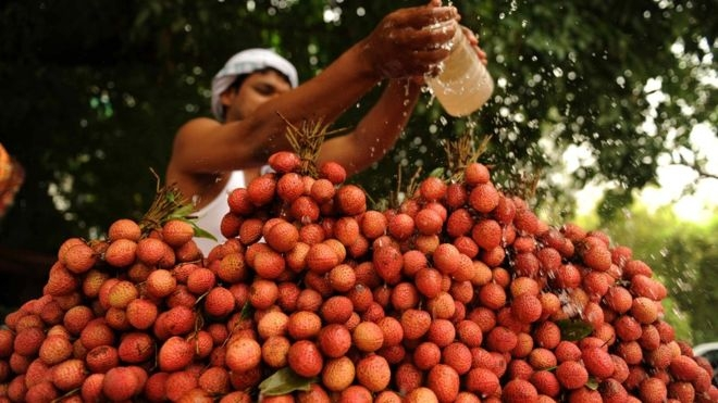 Lychee orchard chemicals linked to child deaths