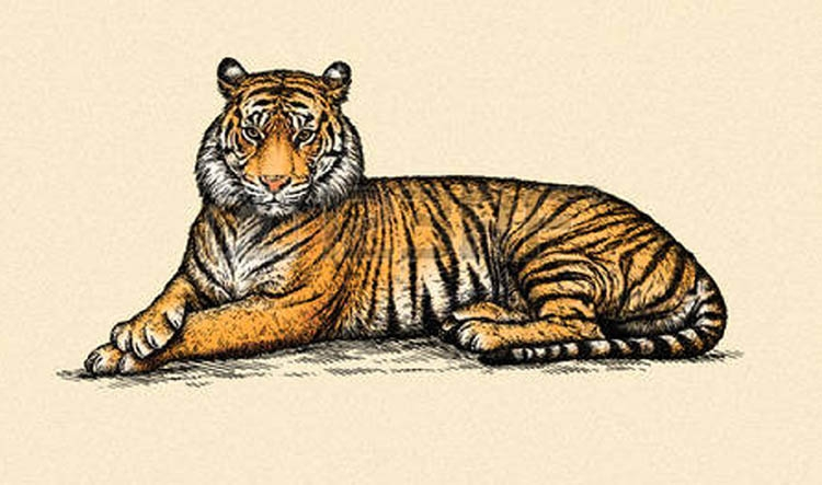 Government committed to tiger conservation
