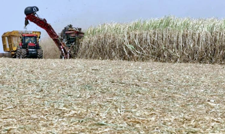 New Brazil ethanol policy should boost demand