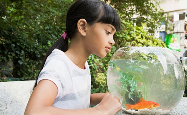 Lonely guests can rent a fish for company in this hotel