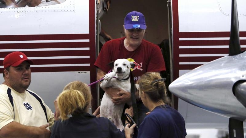 Airlines flies more than 60 animals to shelters after Hurricane Harvey