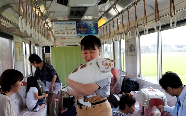 Cats unleashed on Japan railway