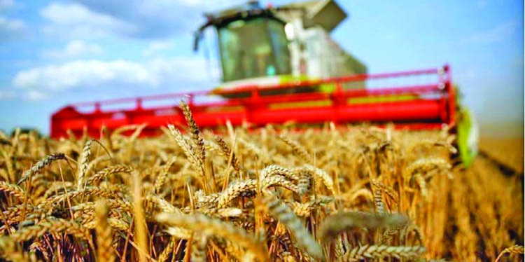 Egypt may reject French wheat