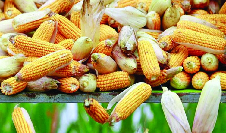 China to roll out nationwide ethanol  use by 2020