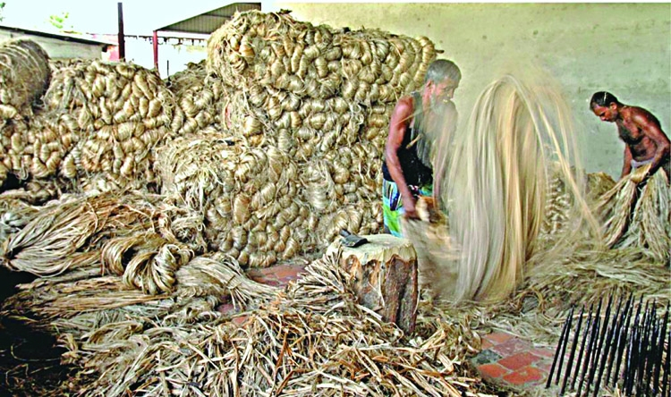 Tk 1,000 crore fund planned to boost jute output