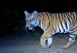 Shoot-at-sight order remains for maneating tigress