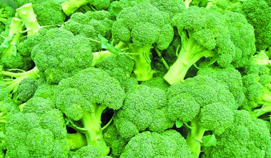 Incredible benefits of Broccoli