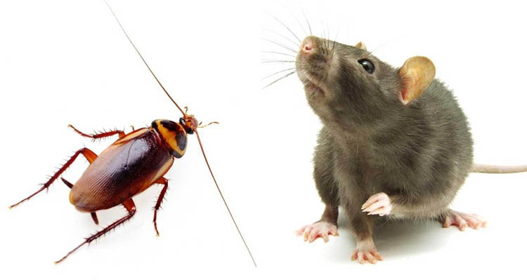 Living with rats and cockroaches