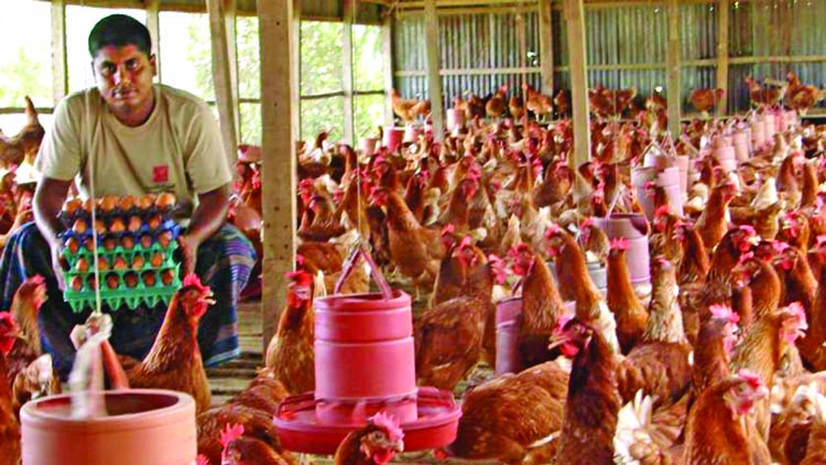 Poultry industries provide  60 lakh employments